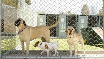 Dog Kennel Flooring Southern Illinois